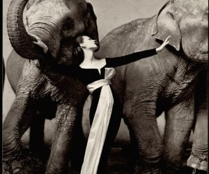 Record mundial de Richard Avedon